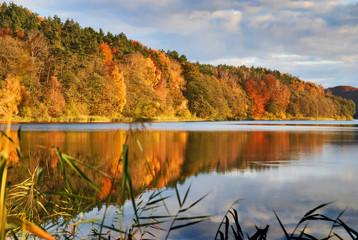 Fototapeta Złota polska jesień, lesisty brzeg jeziora Dębno obraz