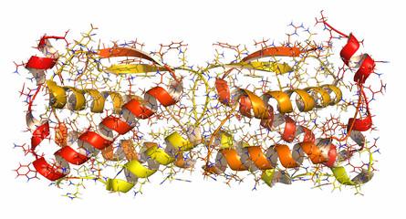 Colony stimulating factor 1 (CSF-1, M-CSF).