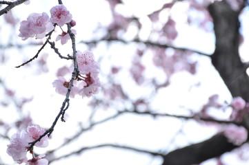 Spring is Blooming#3