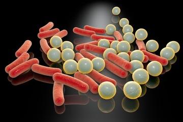 Rod-shaped and spherical bacteria, Escherichia coli, Salmonella, Shigella, Klebsiella, Mycobacterium tuberculosis, Legionella, Pseudomonas, Yersinia pestis, Staphylococcus, Streptococcus, other cocci