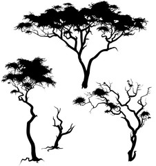 savanna trees
