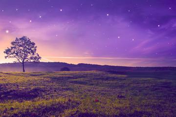beautiful evening  landscape