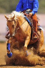 The close-up view of a rider sliding a horse into the sand.