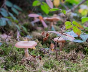 Pilze im Zauberwald