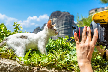 Kitten posing at Meteora Greece