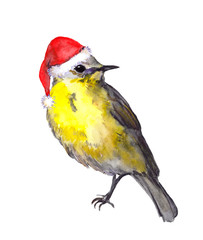 Bird in red santa hat. Christmas water colour