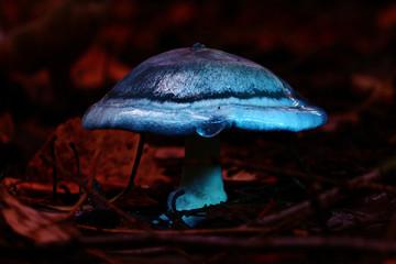 small poisonous mushroom, magic picture