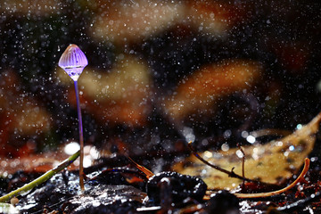 small poisonous mushroom, magic picture