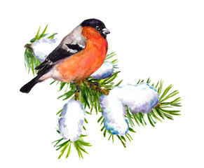 Winter bullfinch on spruce with snow