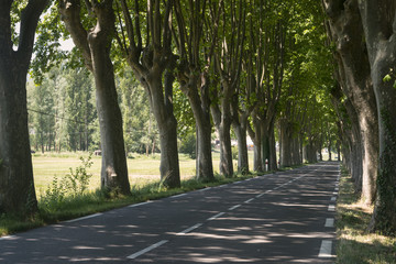 Road in Provence (France)