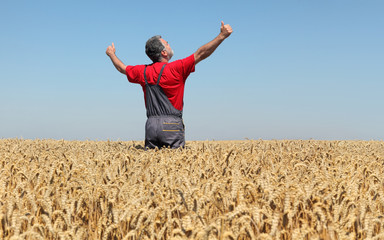 Agricultural scene, happy farmer in wheat field with hands and thumbs up