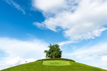 One tree on a grassy knoll with blue sky