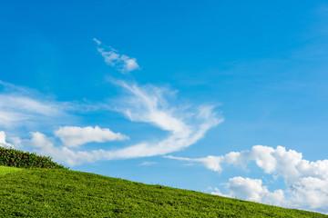 grassy knoll with blue sky