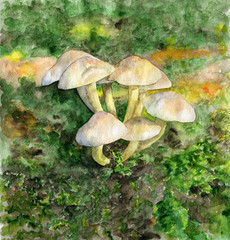 Watercolor drawing. Mushrooms in the forest on the grass.