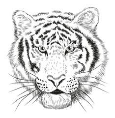 tiger head graphic portrait