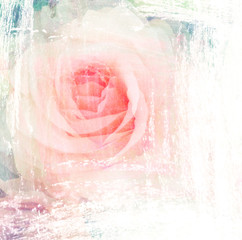 Flower beautiful rose, art paint illustration for background