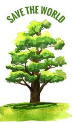 Watercolor oak tree. Vector illustration