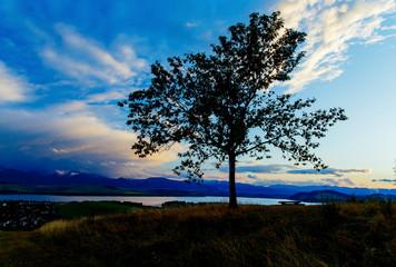Night lake and Tree with dark blue sky