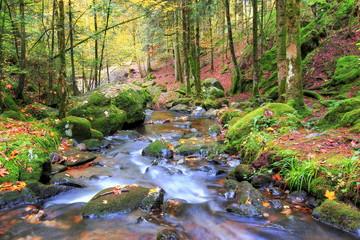 Paysage automnal / paysage aux couleurs d'automne en forêt Vosgienne