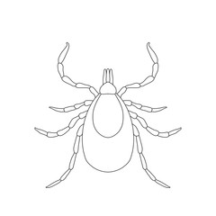 Tick parasite. Sketch of Tick. Mite. Tick isolated on white
