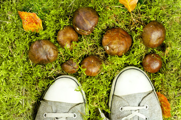sneakers with mushrooms on the moss
