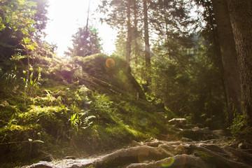 Wanderweg, Sonnenstrahlen