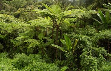 lush green jungle foliage