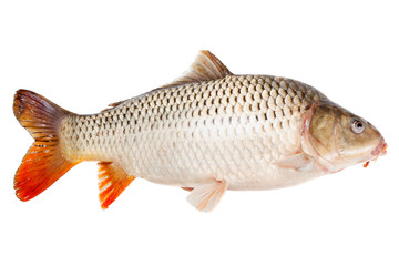 Carp fish half-face isolated on white background