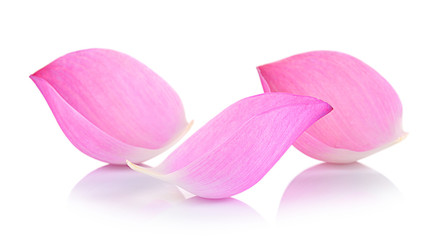 Closeup on lotus petal on white background