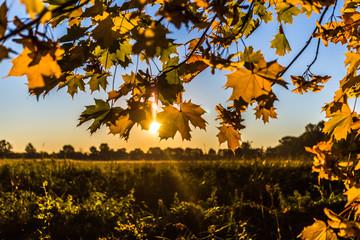 Herbst in Mecklenburg-Vorpommern