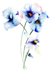 Blue pansy flowers