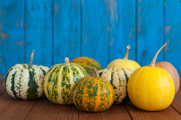 Striped pumpkins background, white, yellow and green. Autumn