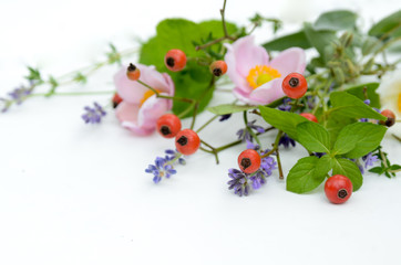 frame of herbs and rose hips