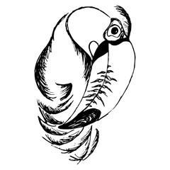 Toucan bird (abstraction).