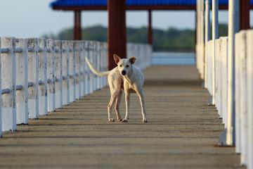 a dog at the bridge