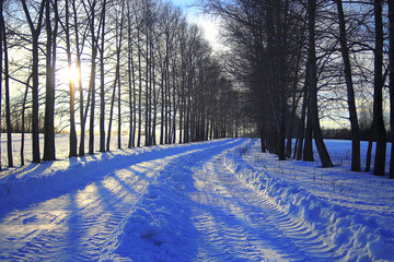Snowy forest winter landscape on a sunny day