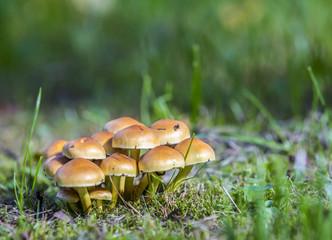 Mushrooms on green grass