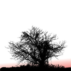 A scary, gnarly tree seen at sunset with space for text
