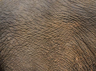 elephant face with detail of skin