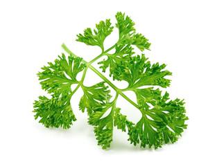 fresh green parsley on white background