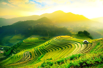 Foto auf Acrylglas Reisfelder Rice fields on terraced of Mu Cang Chai, YenBai, Vietnam. Rice fields prepare the harvest at Northwest Vietnam.Vietnam landscapes.