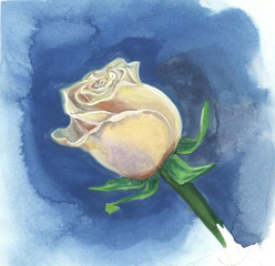 Creamy rose on a blue background. Watercolor painting.