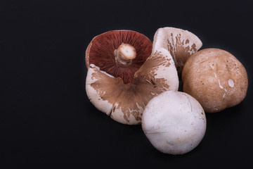 eatable mushrooms on a black background. lepiote mamelonnee end agaricus campestris