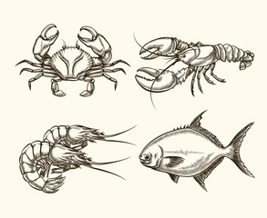 Vector seafood in hand drawn style