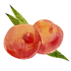 Watercolor peaches with leaves