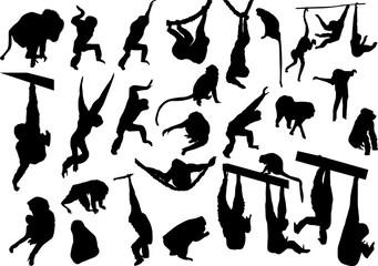 set of twenty nine monkeys isolated on white