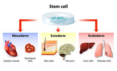 stem cell application