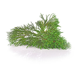 Pine leaf on white background
