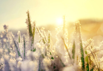Frozen grass at sunrise close up. Nature background.