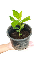Female holding tree in pot on isolated background